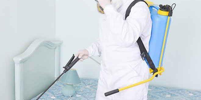 شركات مبيدات الحشرات بجدة