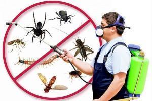 شركة مكافحة الحشرات بجدة