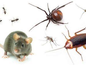 افضل شركة مكافحة حشرات وفئران