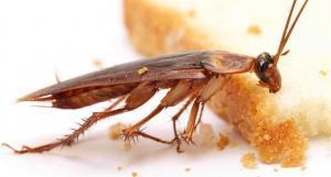 شركة مكافحة حشرات وفئران
