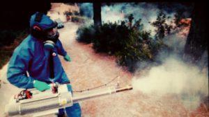 شركة مكافحة الحشرات بالدخان